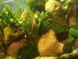 Оформление и обслуживания аквариумов